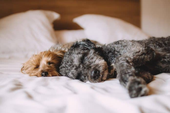 puppies sleeping on a bed