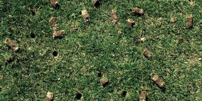 Lawn Aeration 101: How Often Should You Aerate Your Lawn?