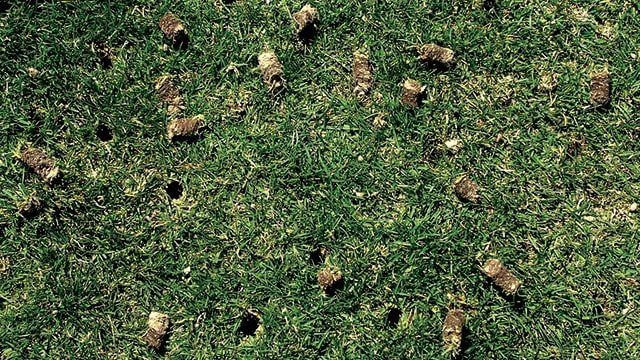 Lawn Aeration 101 How Often Should You Aerate Your