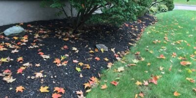 What Is the Purpose of Mulch? (5 Reasons to Use Mulch)