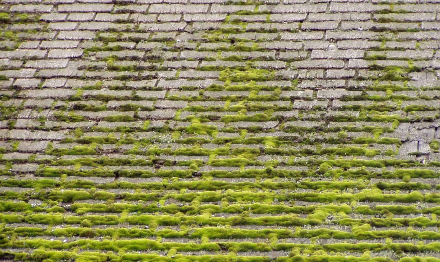 why does moss grow on roofs