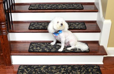 Dog On Stairs With Carpet Treads